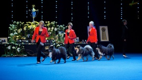 Kennel Peikkovuoren was BOB-breeder at World Dog Show Helsinki 2014 over fifty entried Finnish Lapphund breeders