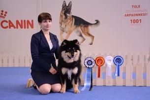 Peikkovuoren Caesar Finnish Winner 2015