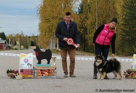 Peikkovuoren Vahca BEST IN SHOW in The Lapphund Club of Finland Autumn Specialty Show 4.10.2015