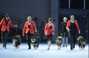 Kennel Peikkovuoren BIS3 BREEDER at Finnish Winner 2015