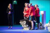 Kennel Peikkovuoren BIS1 BREEDER at Helsinki Winner 2018