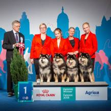 Kennel Peikkovuoren BIS1 BREEDER at Helsinki Winner 2018