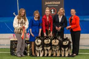 Kennel Peikkovuoren BIS1 BREEDER at Imatra INT 2017