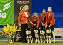 Kennel Peikkovuoren BIS3 BREEDER at Imatra 2018