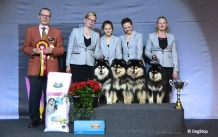 Kennel Peikkovuoren BIS1 BREEDER at Tampere NORD 2019