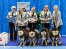 Kennel Peikkovuoren BIS1 BREEDER at Vaasa INT 2019