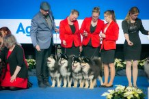Kennel Peikkovuoren BIS3 BREEDER at Finnish Winner 2019